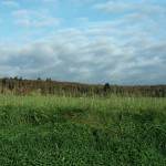 ARCHE-Foto Keltern-Weiler Blick hoch zum Wald vor dem Einschnitt