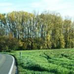 ARCHE-Foto Keltern-Weiler Die Fahrt Herbstblätter in den Talwiesen