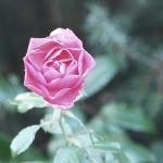 Edel. Pink.