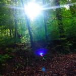 Der Geist des Waldes. Und die Sonne. Erwacht.
