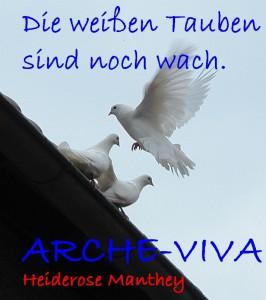 Weltfriede. Die weißen Tauben sind noch wach.