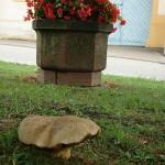 ARCHE Keltern-Weiler Plätzle am Pfarrhaus Pilze_04