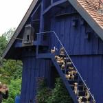 ARCHE Keltern-Weiler Kooperation St. Michaelshof_06