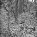 Waldfriedhof.